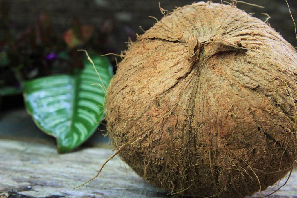 coco seco fresco