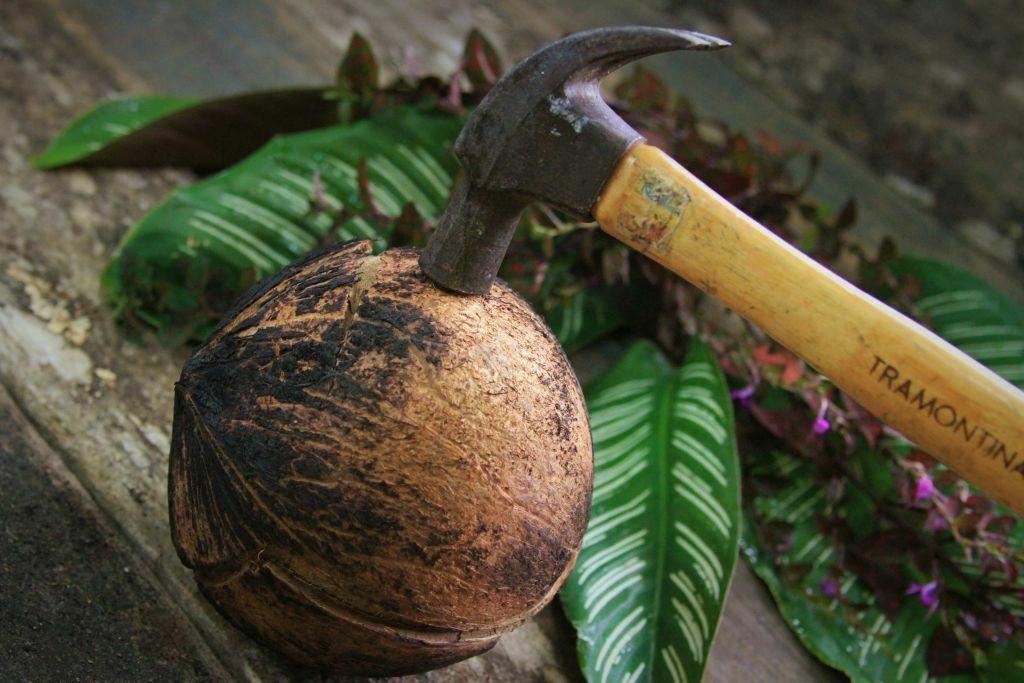 como abrir coco seco fácil