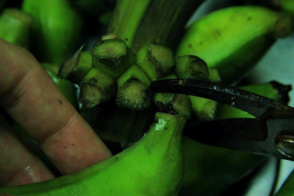 Corte a banana verde com uma tesoura de poda sem romper a casca